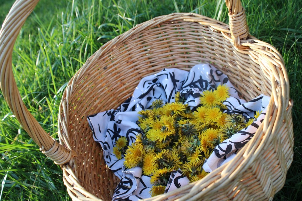dandelion-gathering-basket
